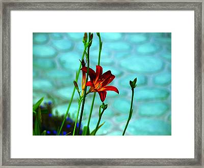 Color Connection Framed Print by Camille Lopez