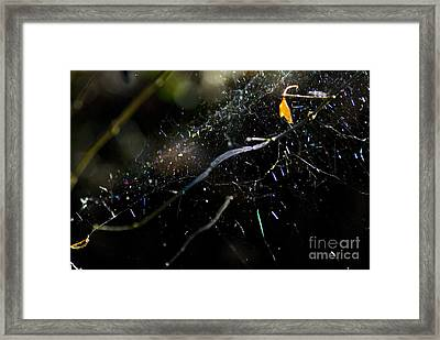 Framed Print featuring the photograph Color Dots Spider Net by Yulia Kazansky