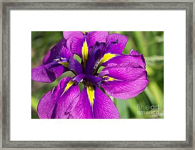 Color Explosion All Profits Go To Hospice Of The Calumet Area Framed Print