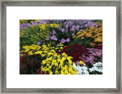 Color Explosion Framed Print