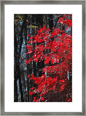 Color Filled Framed Print by Les Scarborough