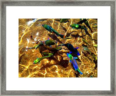 Color Fish Framed Print by Saki Art