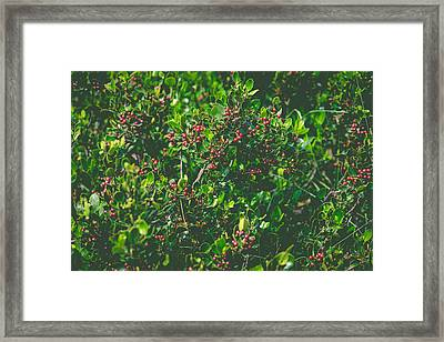 Color Harmony Framed Print by Marco Oliveira