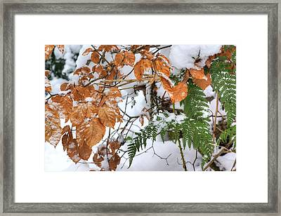 Color In The Snow Framed Print by David Birchall