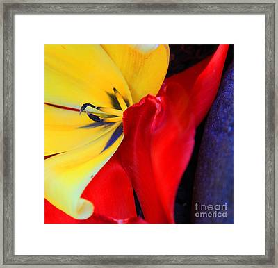 Color Kiss Framed Print by Jeanette French