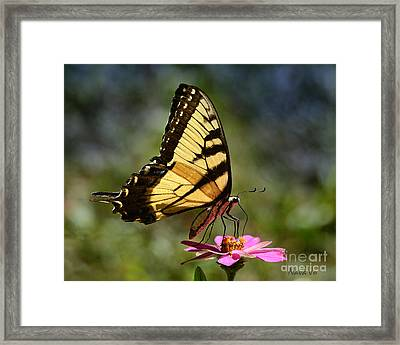 Color Me Beautiful Framed Print by Nava Thompson