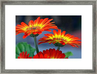 Color Me Happy......... Framed Print