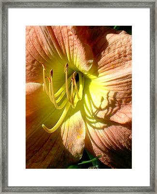 Color Me Just Peachy Framed Print