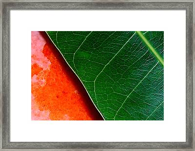 Color Me Mango Sweet And Spicy Framed Print by James Temple