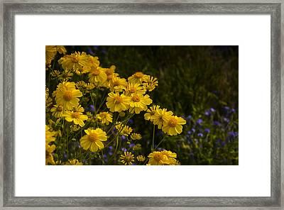 Color Me Yellow  Framed Print by Saija  Lehtonen