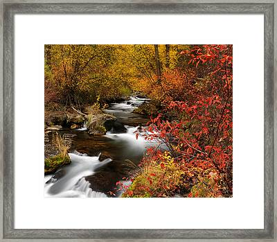 Color Of Autumn Framed Print