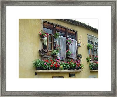 Color Of Life Framed Print by Floria Varnoos