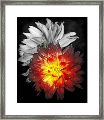 Color Of Life Framed Print by Karen Wiles