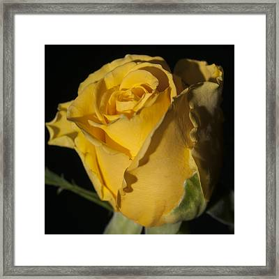 Color Of Love Framed Print by Miguel Winterpacht
