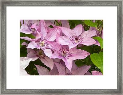 Color Of Pink Framed Print