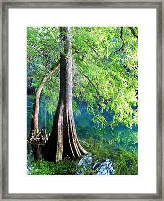 Color Of Summer Framed Print by Sheri McLeroy