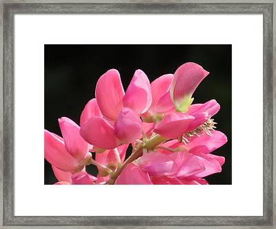 Color Of The Day Framed Print by Loretta Pokorny