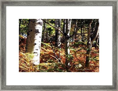 Color On The Trail Framed Print