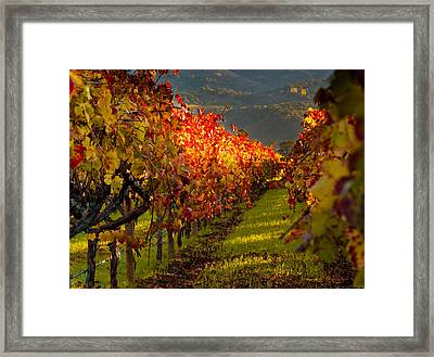 Color On The Vine Framed Print by Bill Gallagher