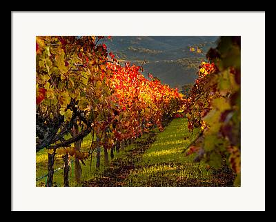 Grapevine Red Leaf Framed Prints