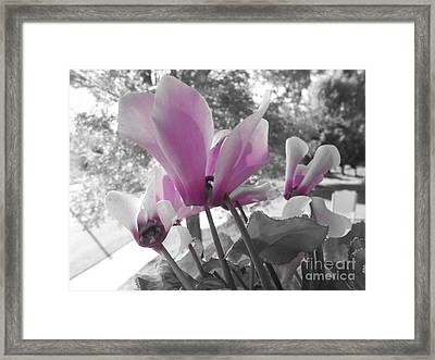 Color Pop  Framed Print