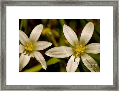Color Power Framed Print by Sheldon Blackwell