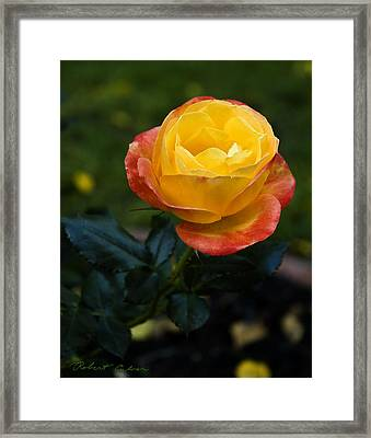 Color Saturation Framed Print