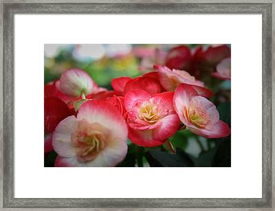 Color Soft Framed Print