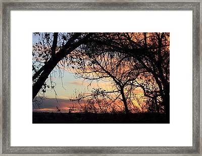 Color Through The Trees Framed Print
