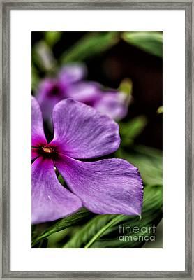 Color Framed Print by Vineesh Edakkara