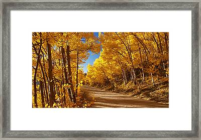 Colorado Aspen Tunnel  Framed Print