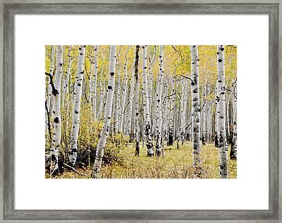 Framed Print featuring the photograph Colorado Aspens by Geraldine Alexander