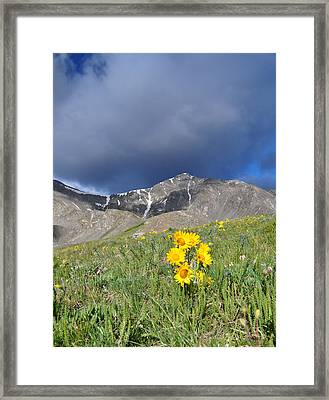 Colorado Beauty Framed Print by Aaron Spong
