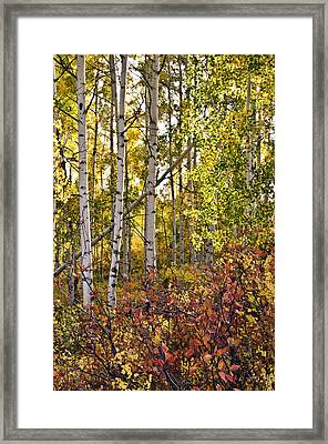 Framed Print featuring the photograph Colorado Changing Eight    by Eric Rundle