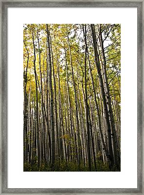 Framed Print featuring the photograph Colorado Changing Fifteen  by Eric Rundle