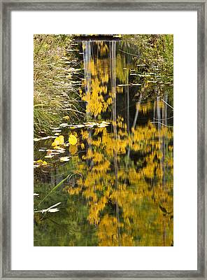 Framed Print featuring the photograph Colorado Changing Five  by Eric Rundle