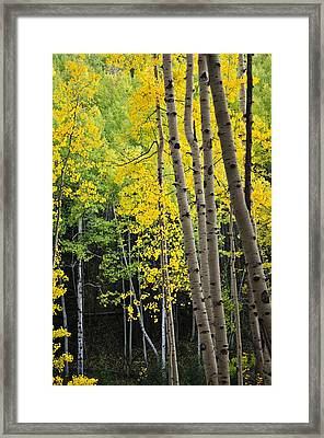 Framed Print featuring the photograph Colorado Changing Two  by Eric Rundle