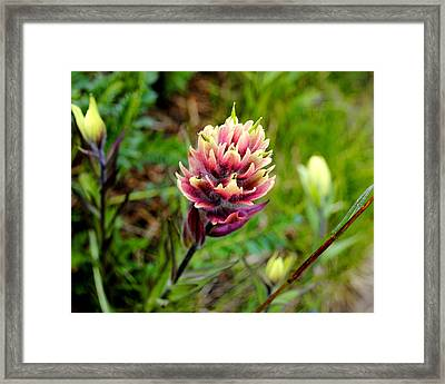 Colorado Color Framed Print by Jessica Tookey