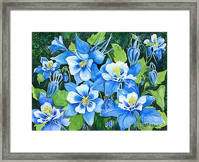 Colorado Columbines Framed Print by Barbara Jewell