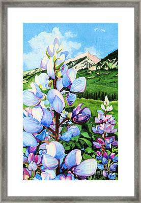 Colorado Summer Blues Close-up Framed Print by Barbara Jewell