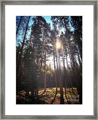Colorado Pines Framed Print by Garren Zanker