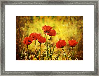 Framed Print featuring the photograph Colorado Poppies by Tammy Wetzel
