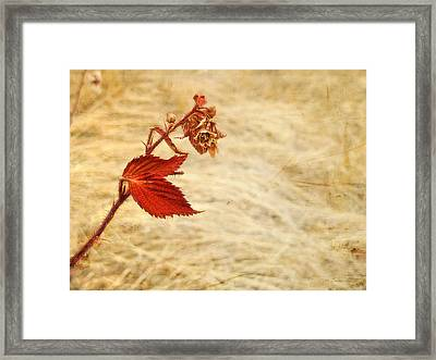 Colorado Red Autumn Leaf Framed Print by Julie Magers Soulen