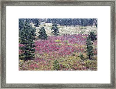 Colorado Red Framed Print by James BO  Insogna
