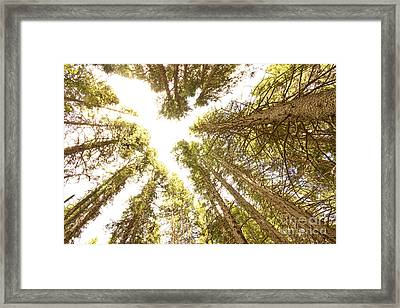Colorado Rocky Mountain Forest Ceiling Framed Print by James BO  Insogna