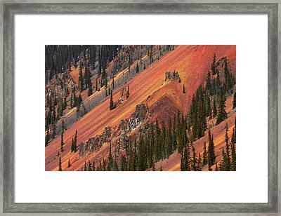 Colorado, San Juan Mountains, Trees Framed Print by David Wall