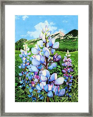 Colorado Summer Blues Framed Print by Barbara Jewell