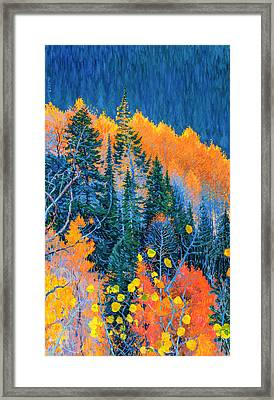 Colorado Trees At Fall Framed Print