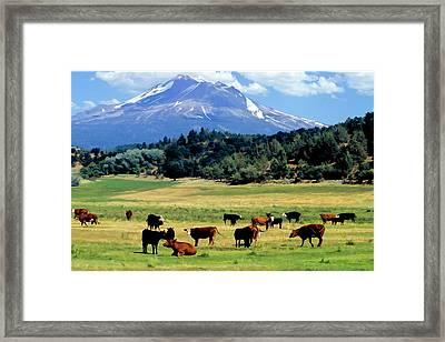 Colorado View Framed Print