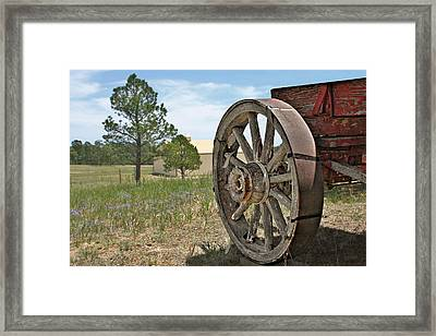 Colorado - Where The Columbines Grow Framed Print